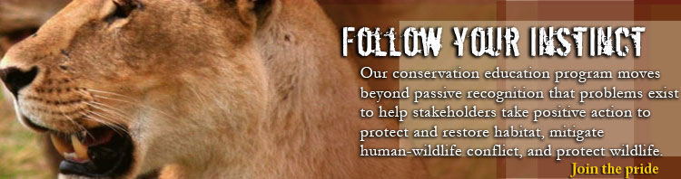 Join the Lion Conservation Fund